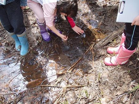 三樽別川チーム カエル池でも卵塊を発見